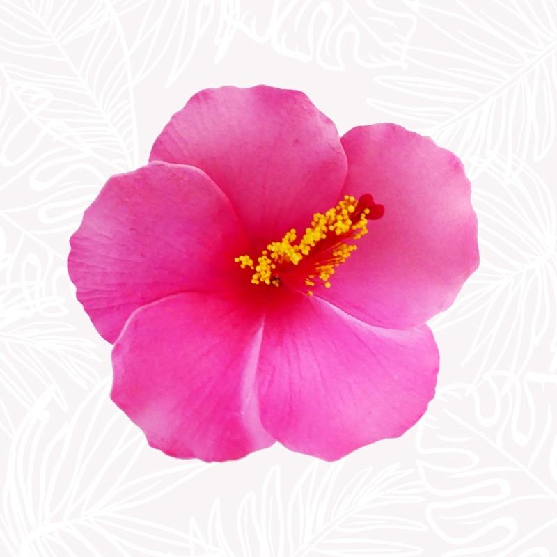 Fleur Cheveux Hibiscus Rose