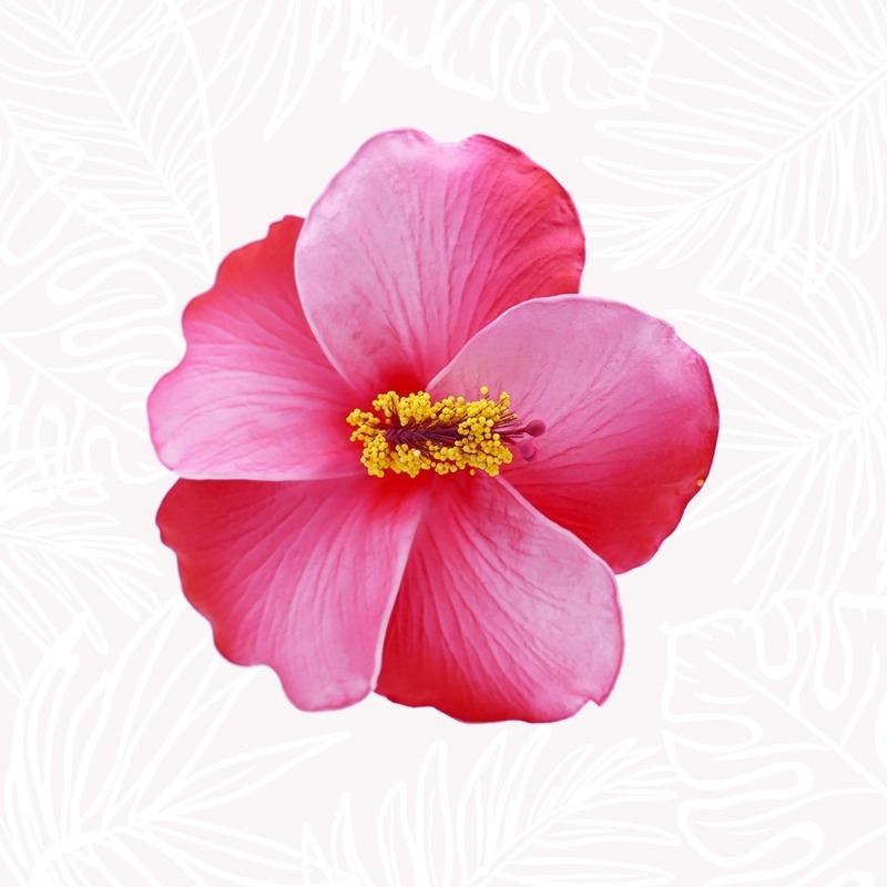Fleur Cheveux Hibiscus Rouge