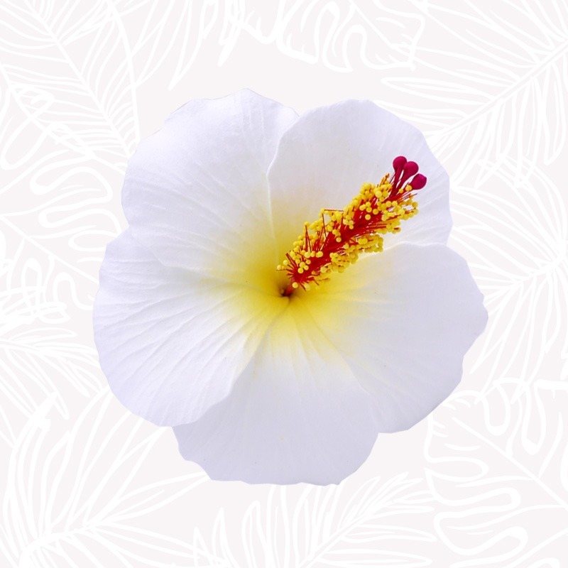 White Hibiscus Hair Flower