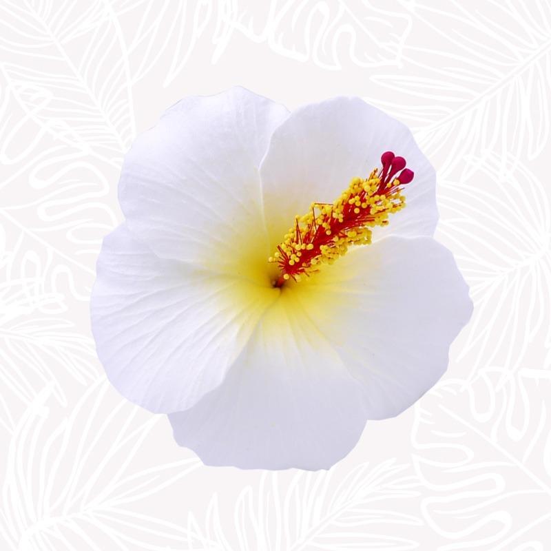 Fleur Cheveux Hibiscus Blanche tige
